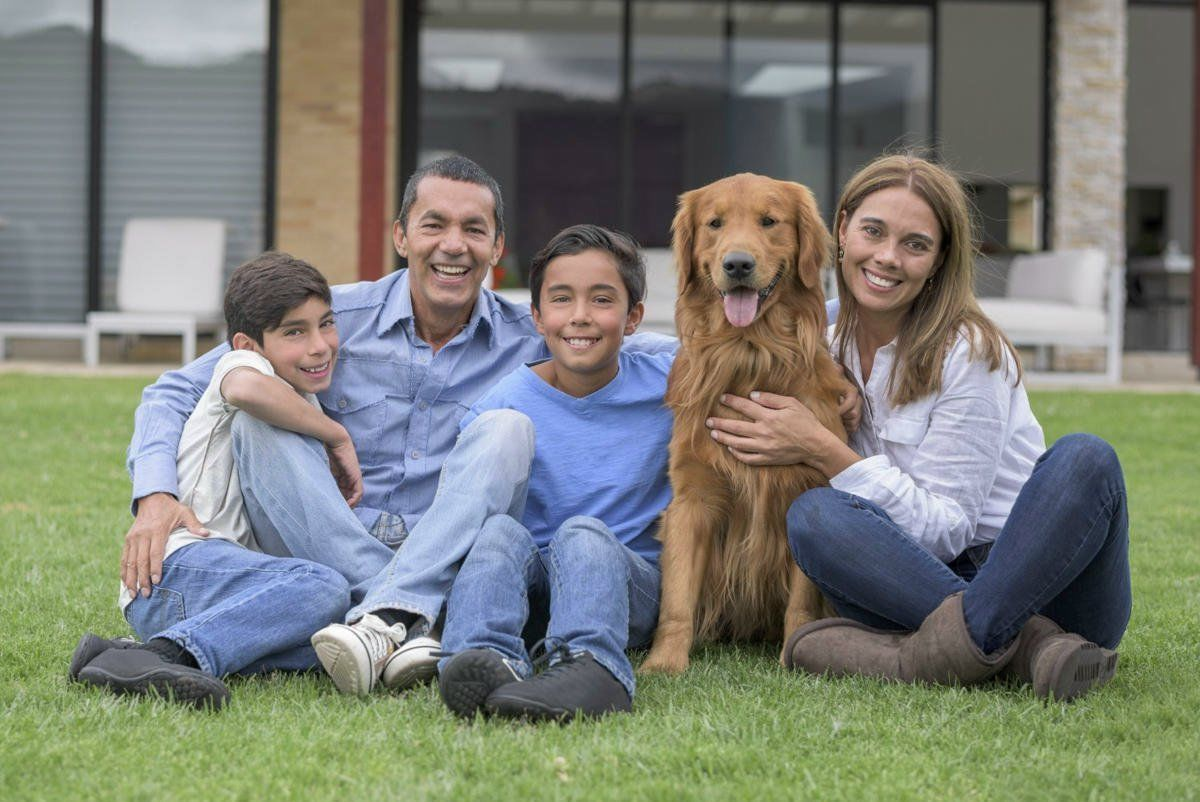 Tips On How To Effectively Manage Your Dog's With Your 5 Tips